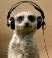 Comparethepressing meerkat veegee