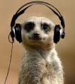 meerkat-MC-VeeGee-Minus-Left
