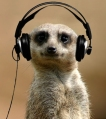 meerkat-MC-VeeGee-Minus-Left