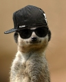 Hip-Hop-Kool-Kat-in-shades