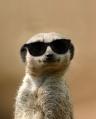 Kool-Kat-in-shades