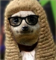 Judge-Meerkats