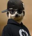 MC-VeeGee-Meerkat-DJ