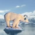antarctica-bear-headphones